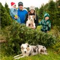 Christmas Tree, Family, Professional Photography, Victoria, BC